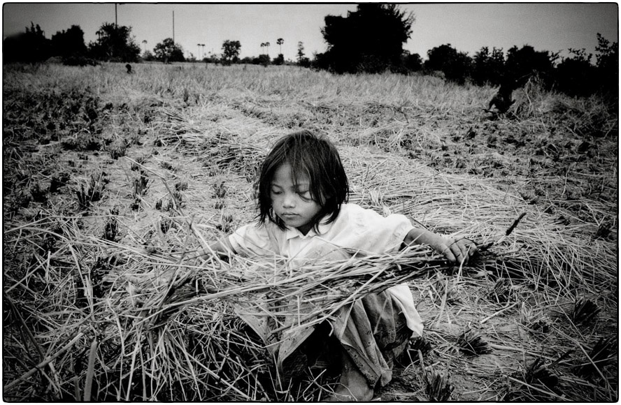 Rice harvest in Cambodia, 1999 :: photo Richard Hanson, copyright Tearfund